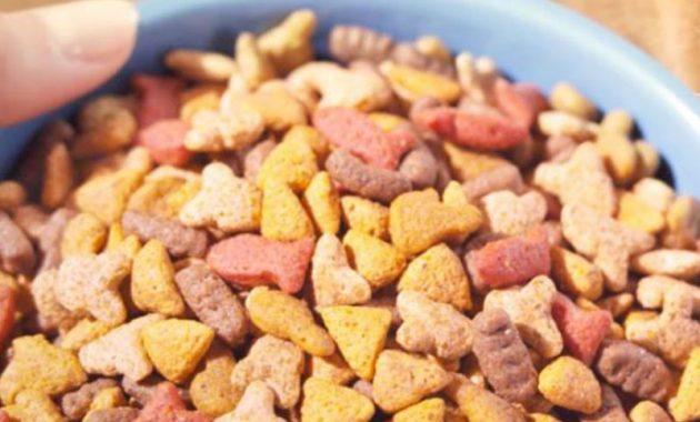 Makanan kucing siamese