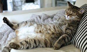 Tips agar anak kucing cepat gemuk