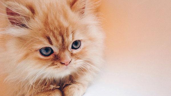 Nama kucing oren lucu