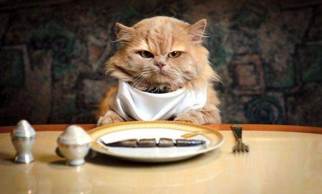 jenis makanan kucing