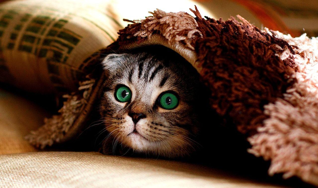 Langkah Menyembuhkan kucing sakit