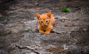 Kucing Lemas dan Tidak Mau Makan
